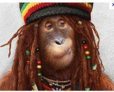 Bob Macaque