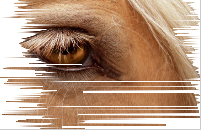 Capture d'écran 2015-05-03 à 18.55.57