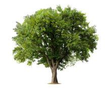 Exposition sur les arbres
